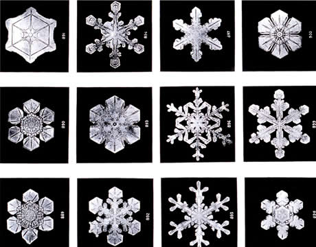 photo of 12 different snowflake structures