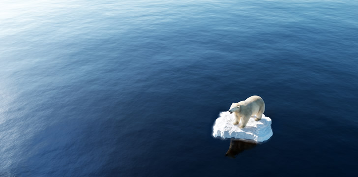 a polar bear standing on a small block of ice surrounded by the sea