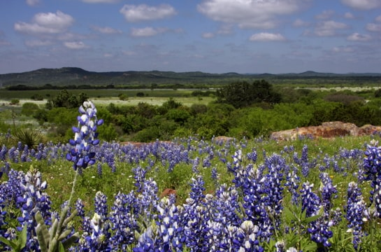 a field of bluebonnets with hills in the background