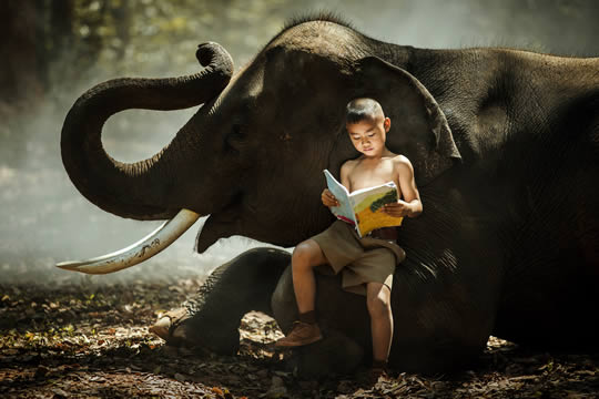 boy sitting on an elephant 's knee while reading a book